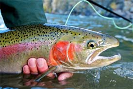 Oklahoma trout fishing rainbow brown trout fishing for Trout fishing oklahoma